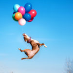 American staffordshire terrier dog jumps in the air to catch flying balloons, dog playing with balloon